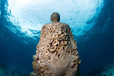 By Jason deCaires Taylor