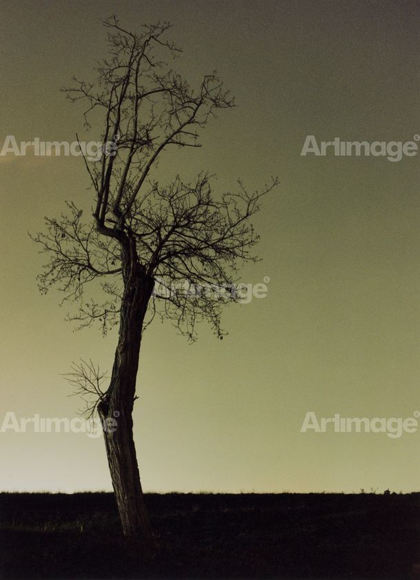 Dead Tree Over Vatican Sky, 2003