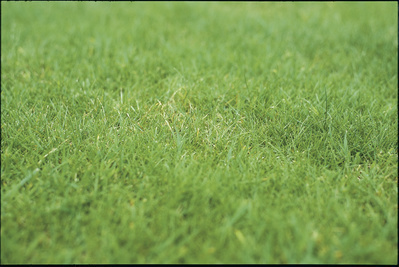 Lawn, 1999 By Graham Fagen