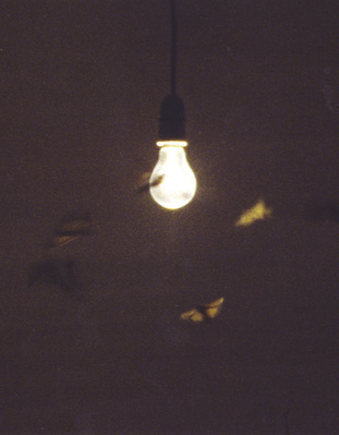 25 Watt Moon, 1996 By Abigail Lane
