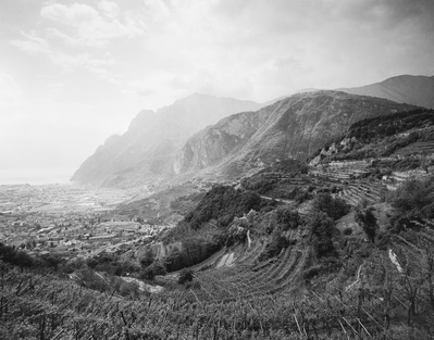 Vineyard by Lake Garda, Italy, 1998 By John Davies