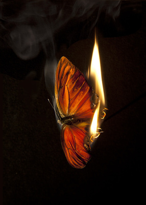 Burning Butterfly 4, 2013