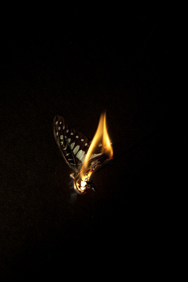 Burning Butterfly 1, 2013