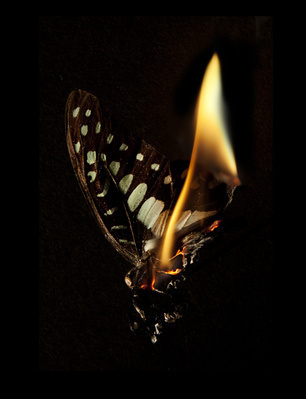 Burning Butterfly 24, 2013