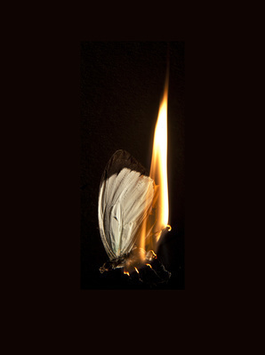 Burning Butterfly 12, 2013 By Mat Collishaw