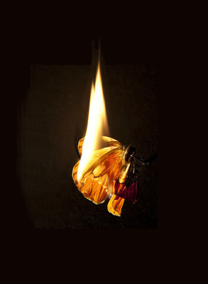 Burning Butterfly 17, 2013 By Mat Collishaw