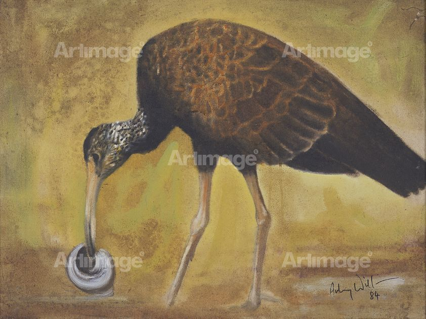 Enlarged version of Limpkin, 1984