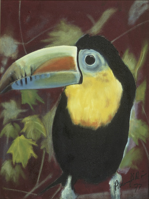 Keel-billed Toucan, 1977