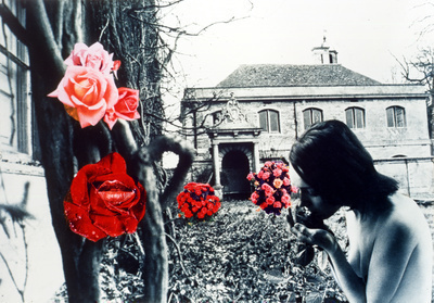 Sigh of the Rose, 1970-77 By Penelope Slinger