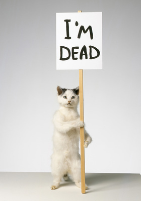 Im Dead (Kitten), 2007 By David Shrigley