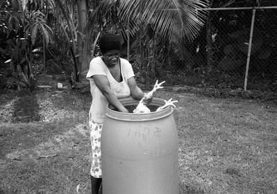 The Long Hen, Jamaica, 2008  By Pogus Caesar