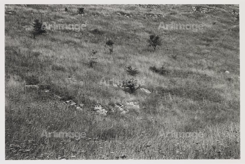 Hawthorn Trees and Mineshaft, Lathkill Dale, 1979