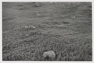 Stones and Circle, Carsington Pastures, 1979 By Paul Hill
