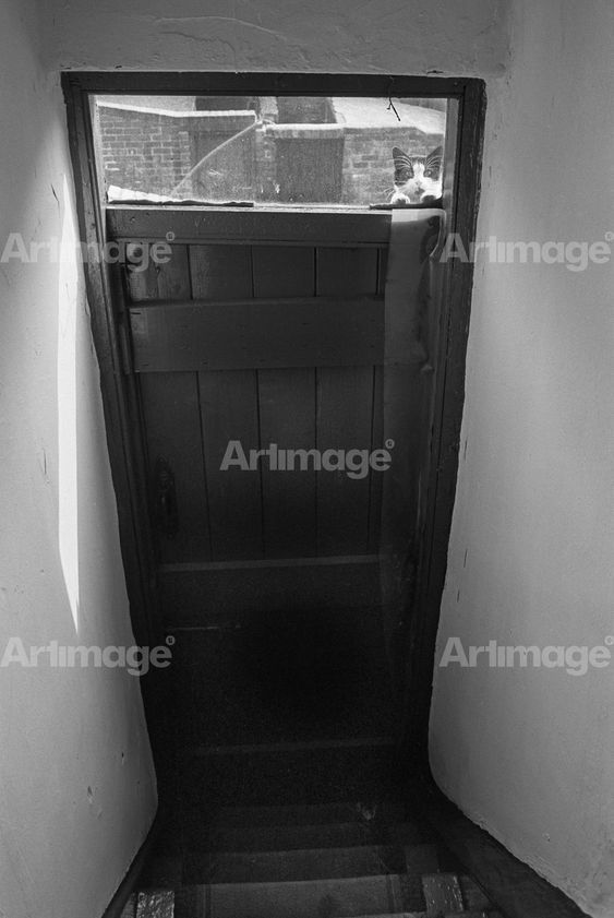 Cat in backdoor window, Mason Street, Byker, 1971